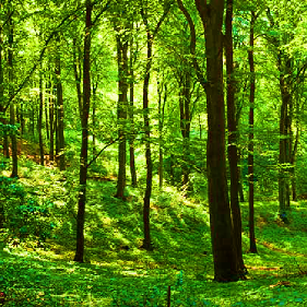 picture of a forest.png